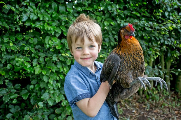 boy-holding-chicken-3
