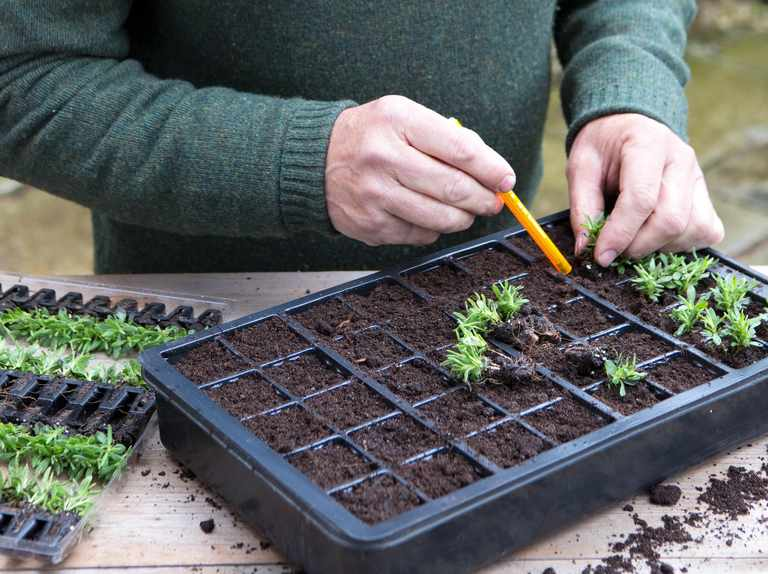 Tips for success with plug plants