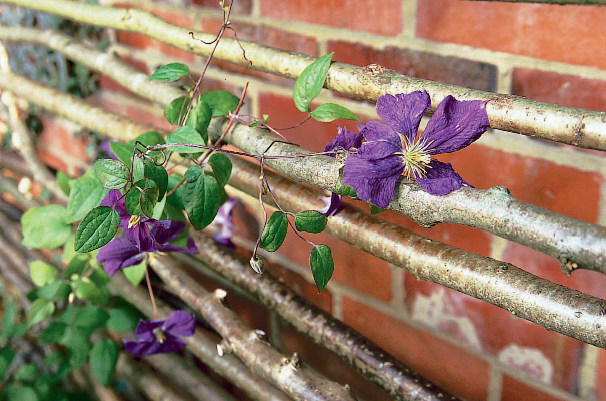 How to make a trellis from hazel poles