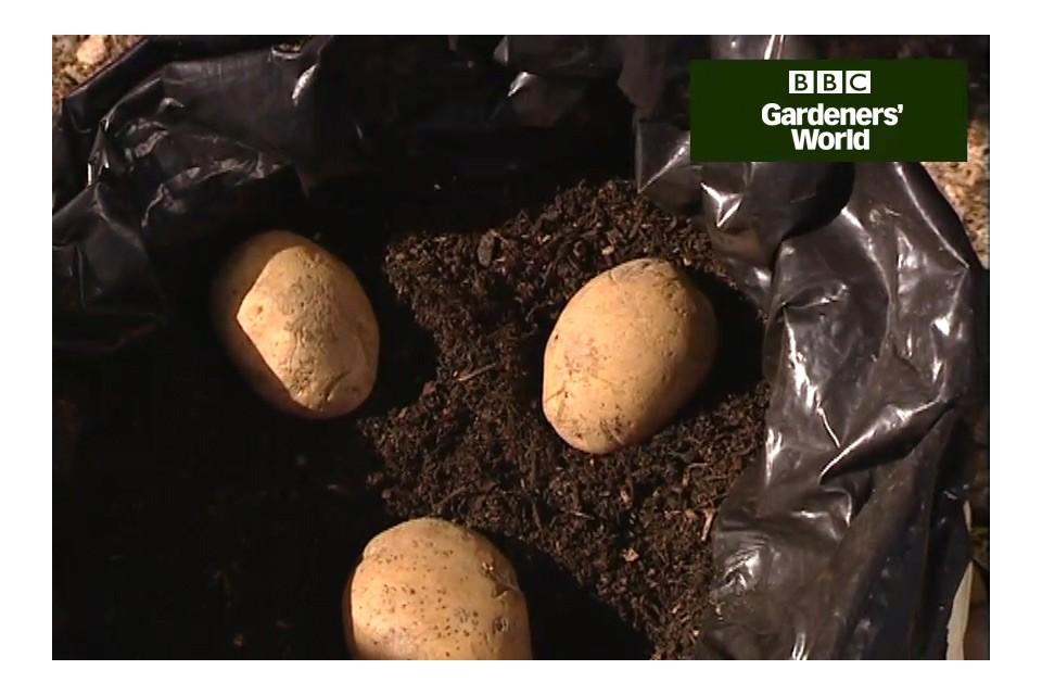 Growing Potatoes In A Bag Video Gardenersworld
