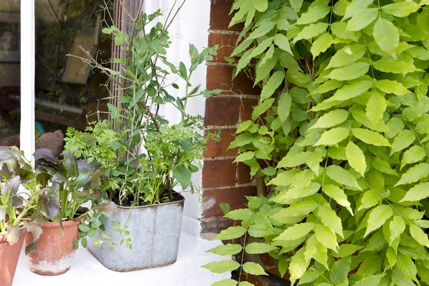 pea-bean-and-carrot-windowbox-2