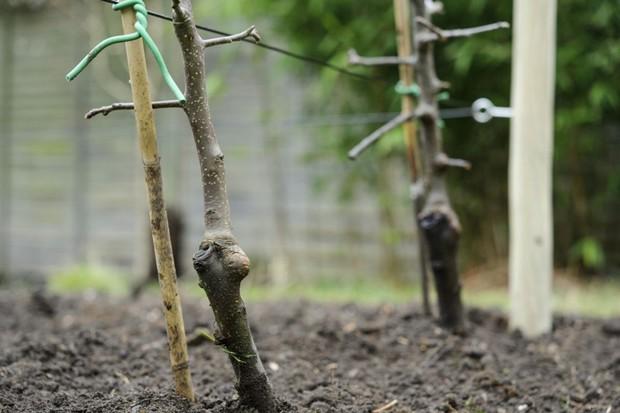 Establishing plants
