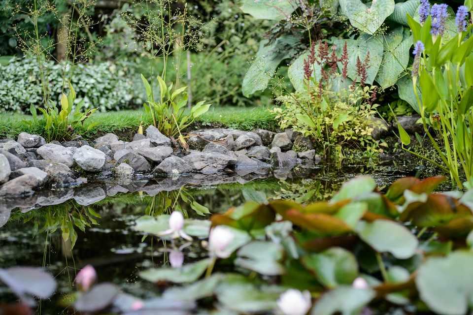 A shady pond