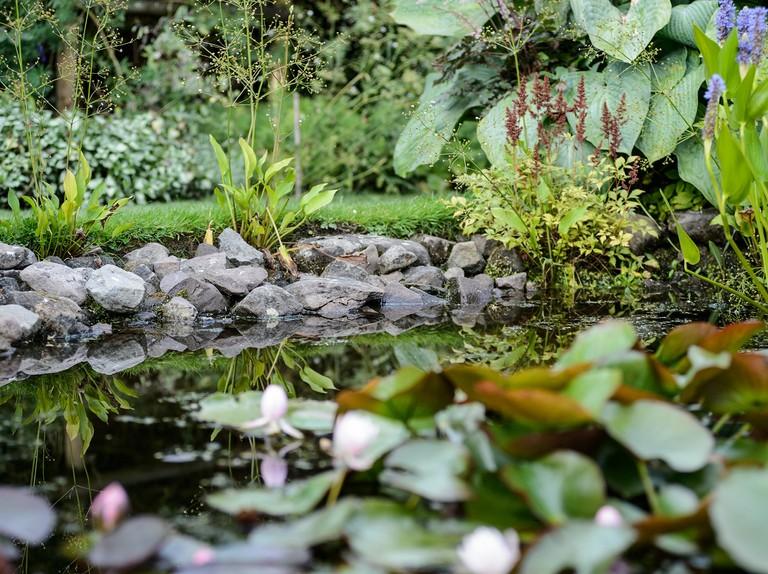 Ponds In Shady Gardens Bbc Gardeners World Magazine
