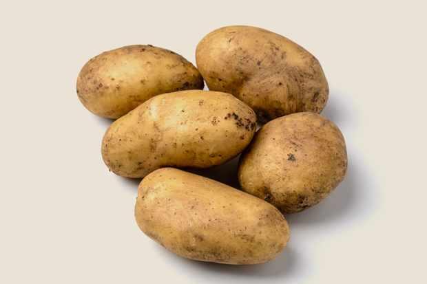 potato-melody-2