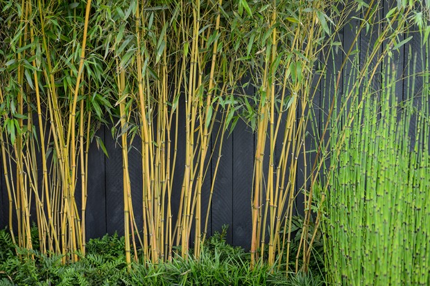 bamboo-against-a-dark-fence-3