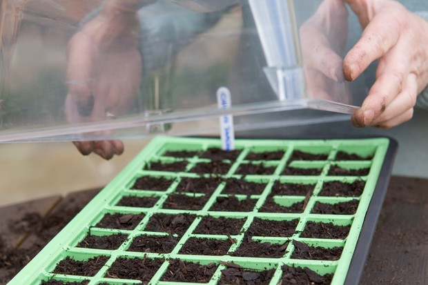 placing-the-seeds-in-a-propagator-2