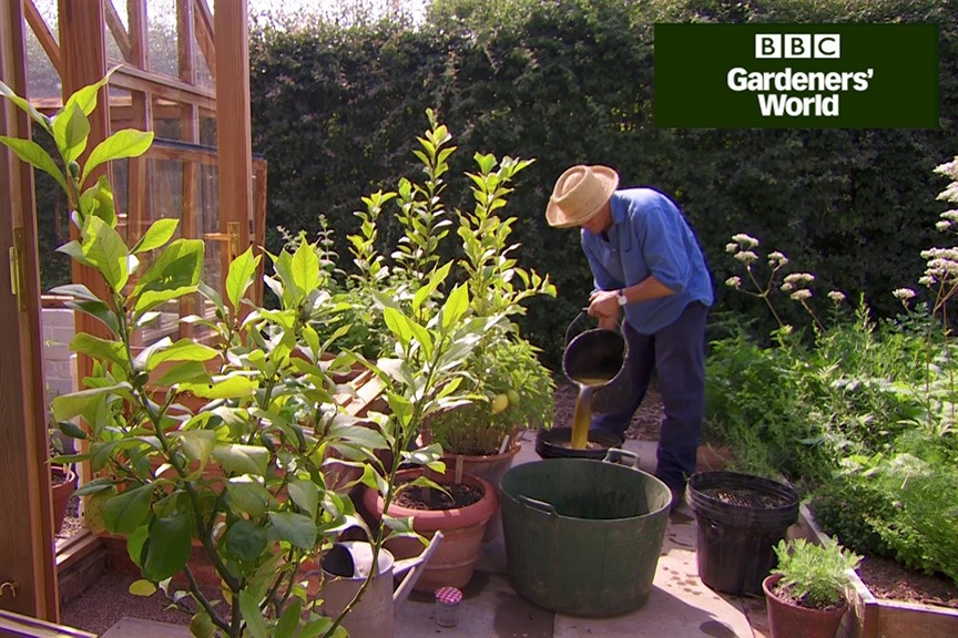 How to prepare nettle and comfrey feed video