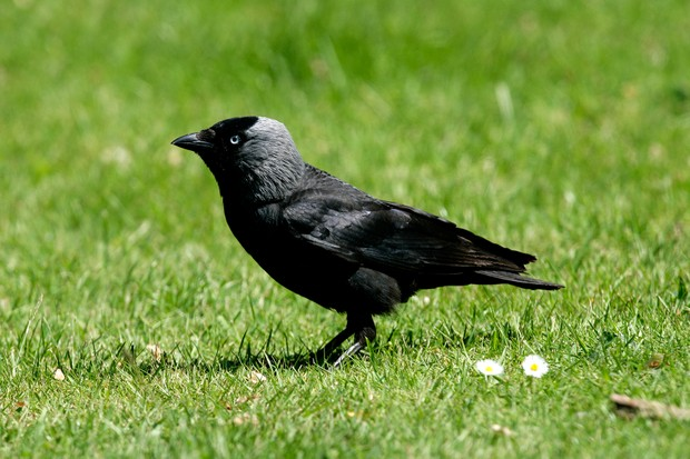 How do I stop jackdaws from eating bird food?