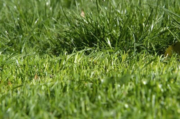different-grass-heights-2