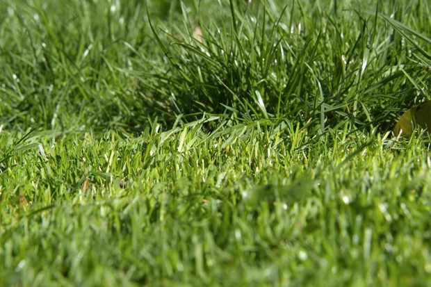 different-grass-heights-2