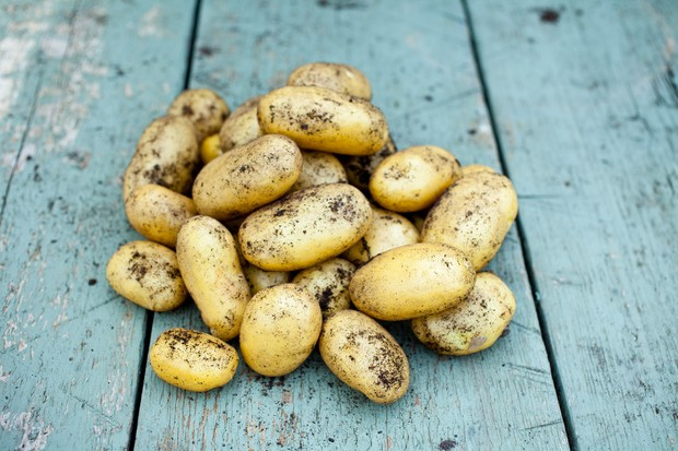 Freshly harvested potatoes on a table