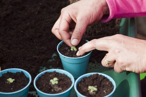 transplanting-seedlings-2