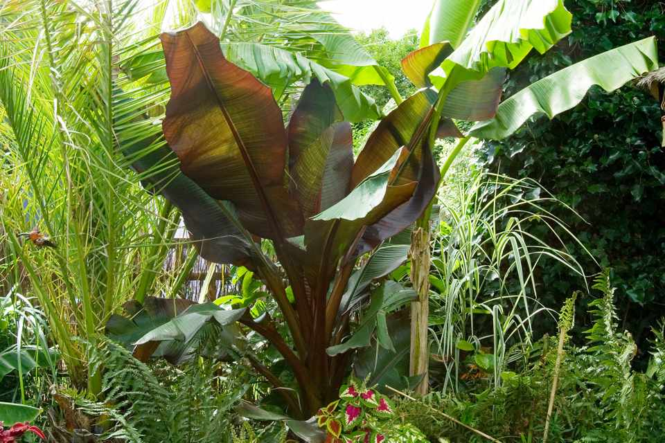Plants for a jungle-style border - tree fern