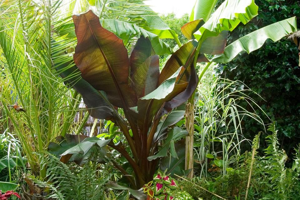 20 Plants For A Jungle Style Border Bbc Gardeners World Magazine