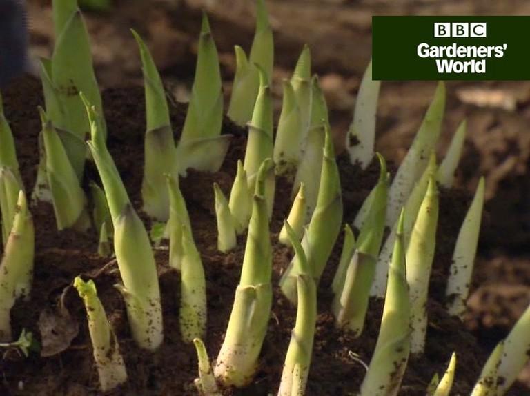 Dividing Hostas Video Bbc Gardeners World Magazine