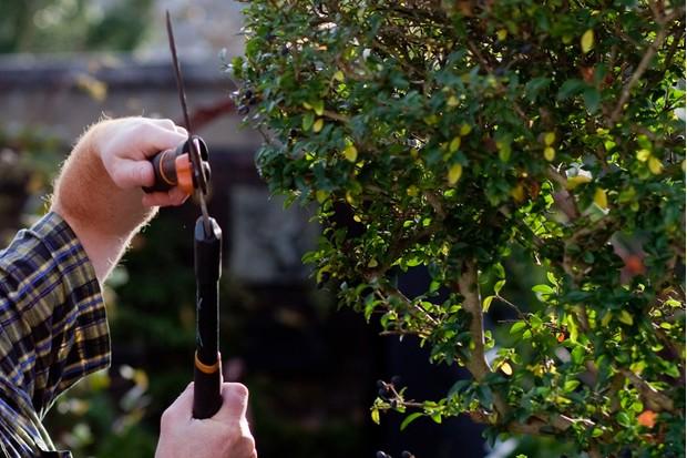 pruning-topiary-2