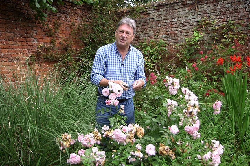 Deadheading roses No Fuss Guide video