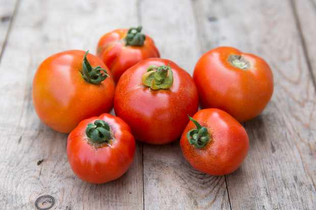 Freshly harvested tomatoes - Grow Guide