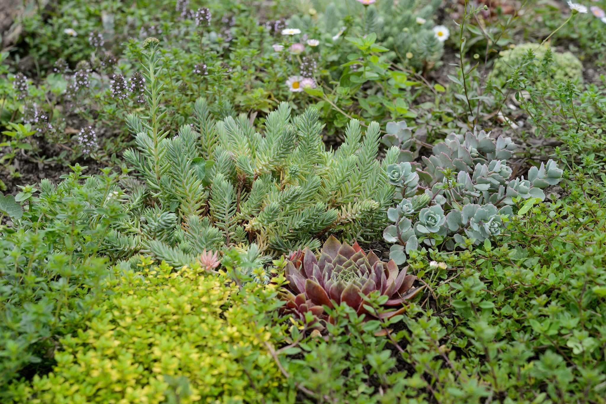 Best Alternatives to a Garden Lawn