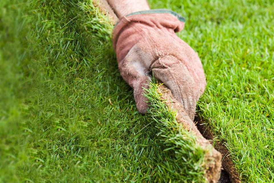 How to lay lawn turf
