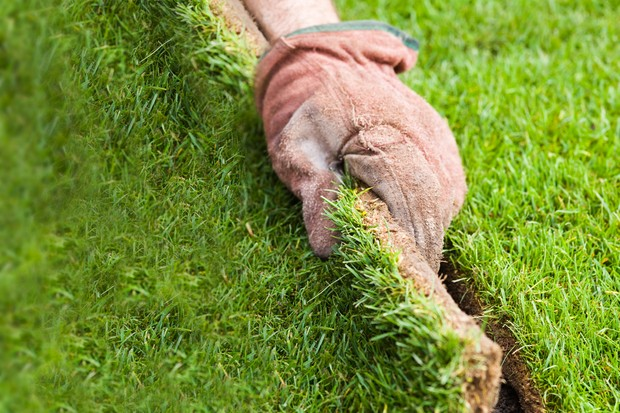 Laying lawn turf