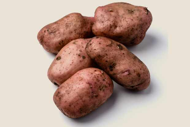 potato-sarpo-mira-8