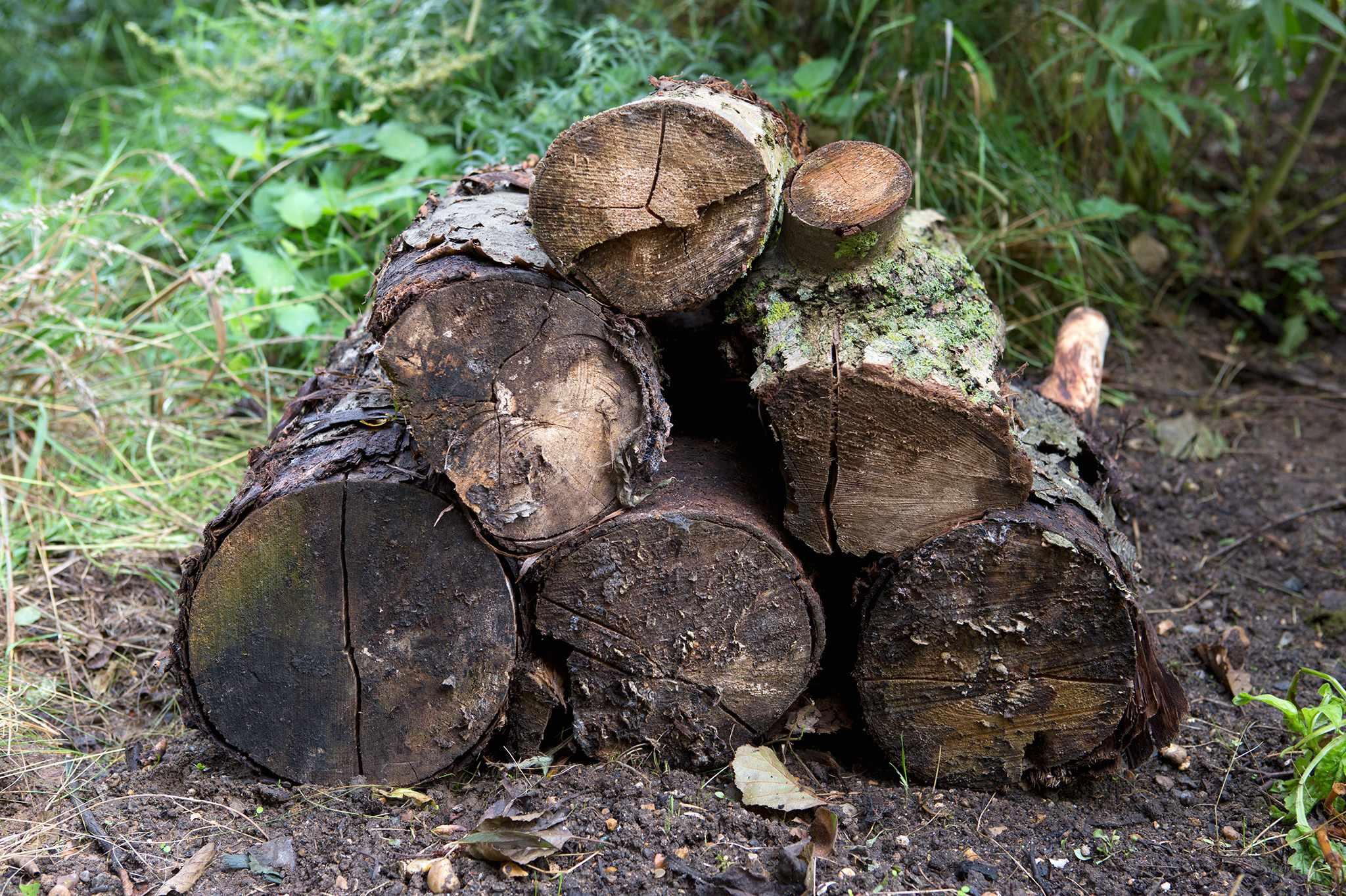 A log pile dead wood wildlife habitat