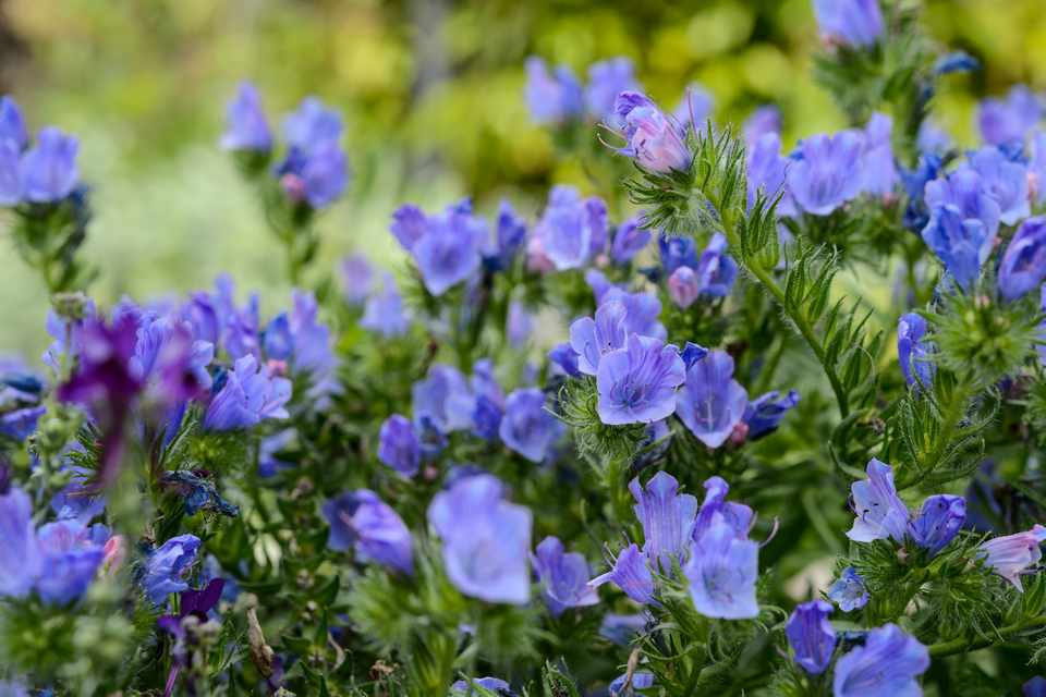 Nectar-Rich Plants to Grow