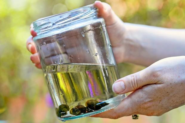 pond-life-in-a-jam-jar-2