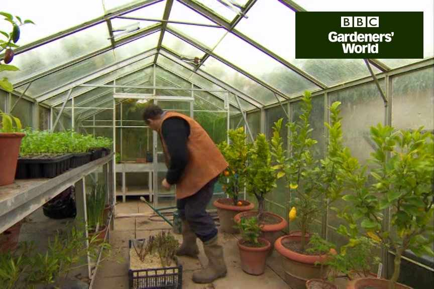 How to overwinter tender dahlias and cannas part three video