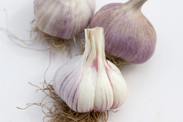 garlic-Purple-striped white bulbs of garlic 'Chesnok White'-white-2