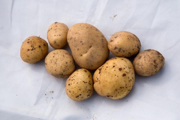 potato-valor-2