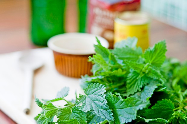 A pile of nettle-tips and other ingredients ready to make nettle beer