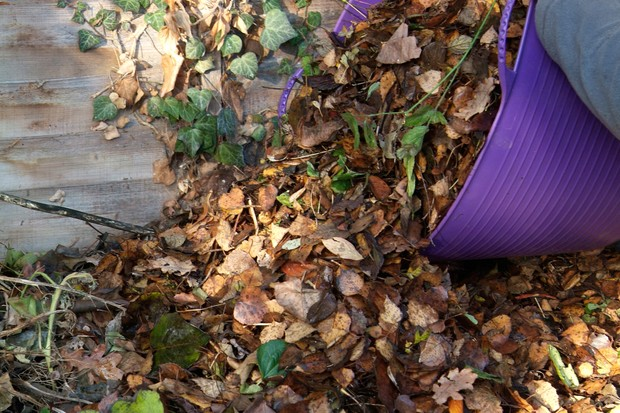 avoid-disturbing-leaf-piles-and-compost-heaps-2