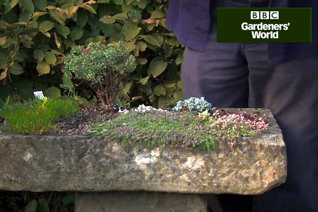 How to plant up an alpine trough video