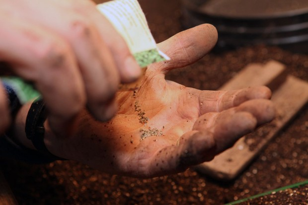 Emptying rocket seed into the hand