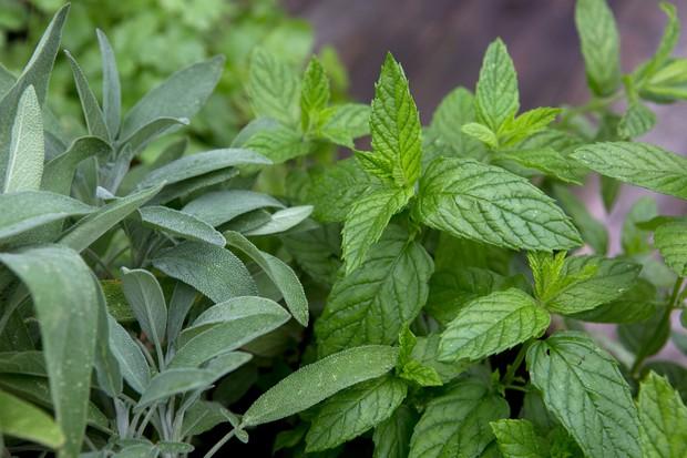 pick-fresh-herbs-2