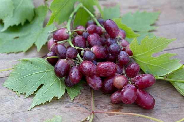 bunch-of-grapes-2