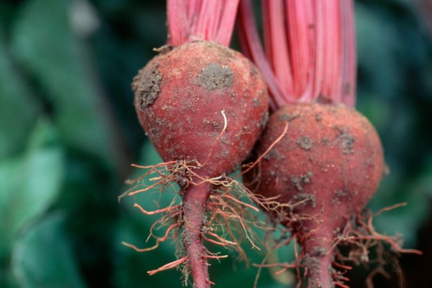 beetroot-solo-2