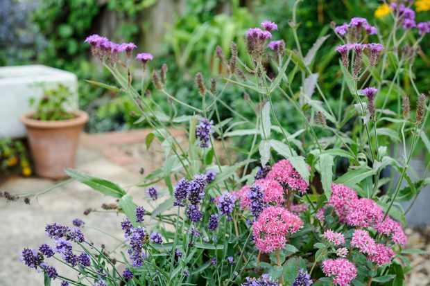 sedum-lavender-and-verbena-2