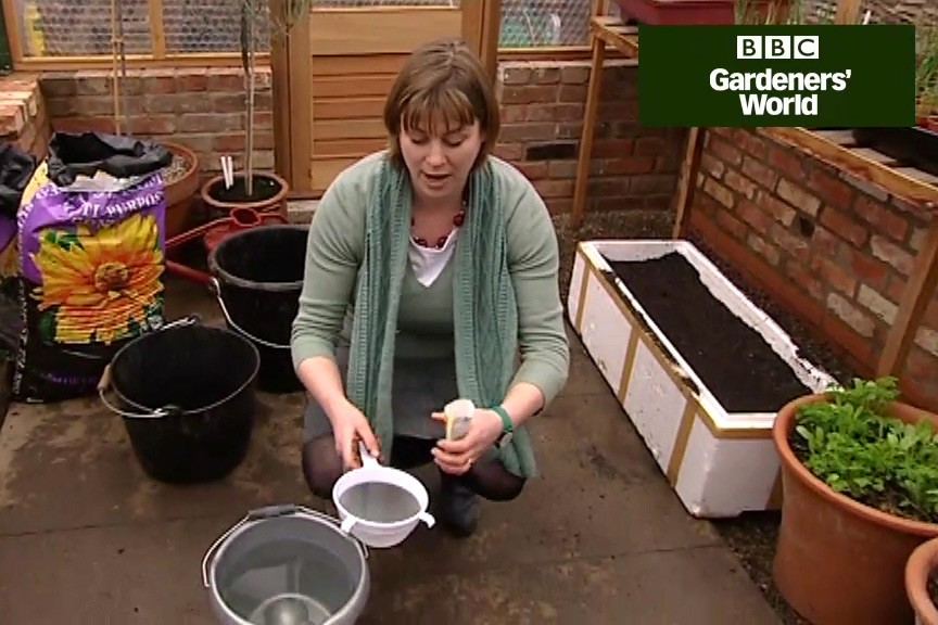 How to grow early beetroot video