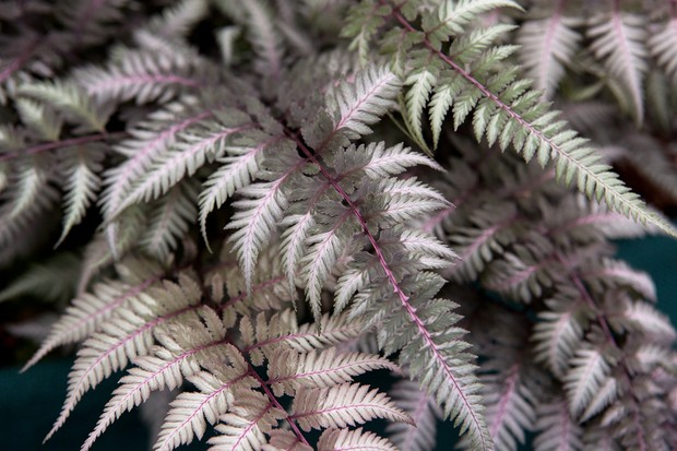 painted-fern-2