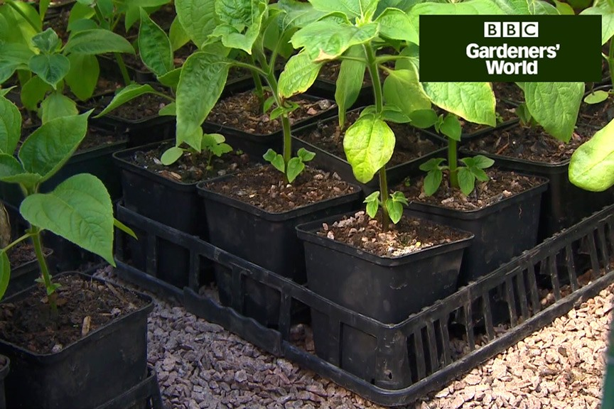 How to control slugs organically video