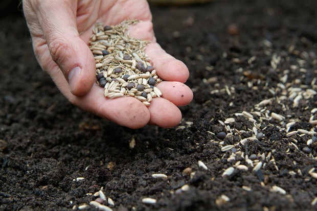 sowing-green-manure-7