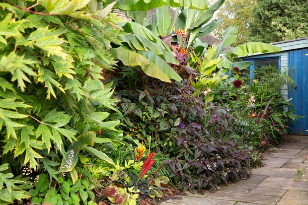 jungle-border-3
