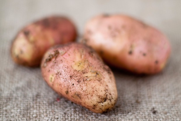 Potato 'Pink Duke of York'