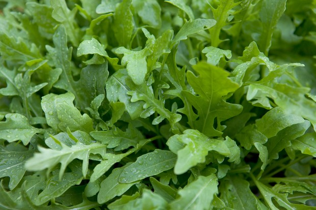 Rocket leaves ready to pick