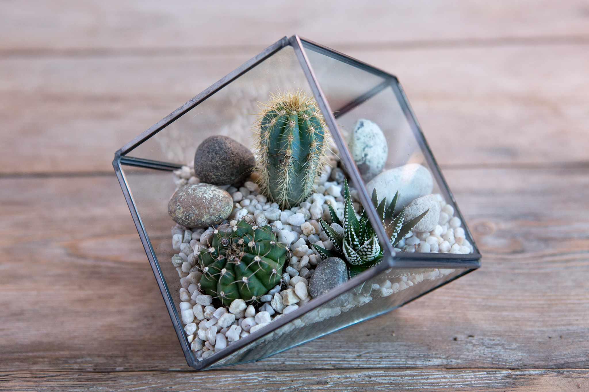 Create a Desert Plant Terrarium