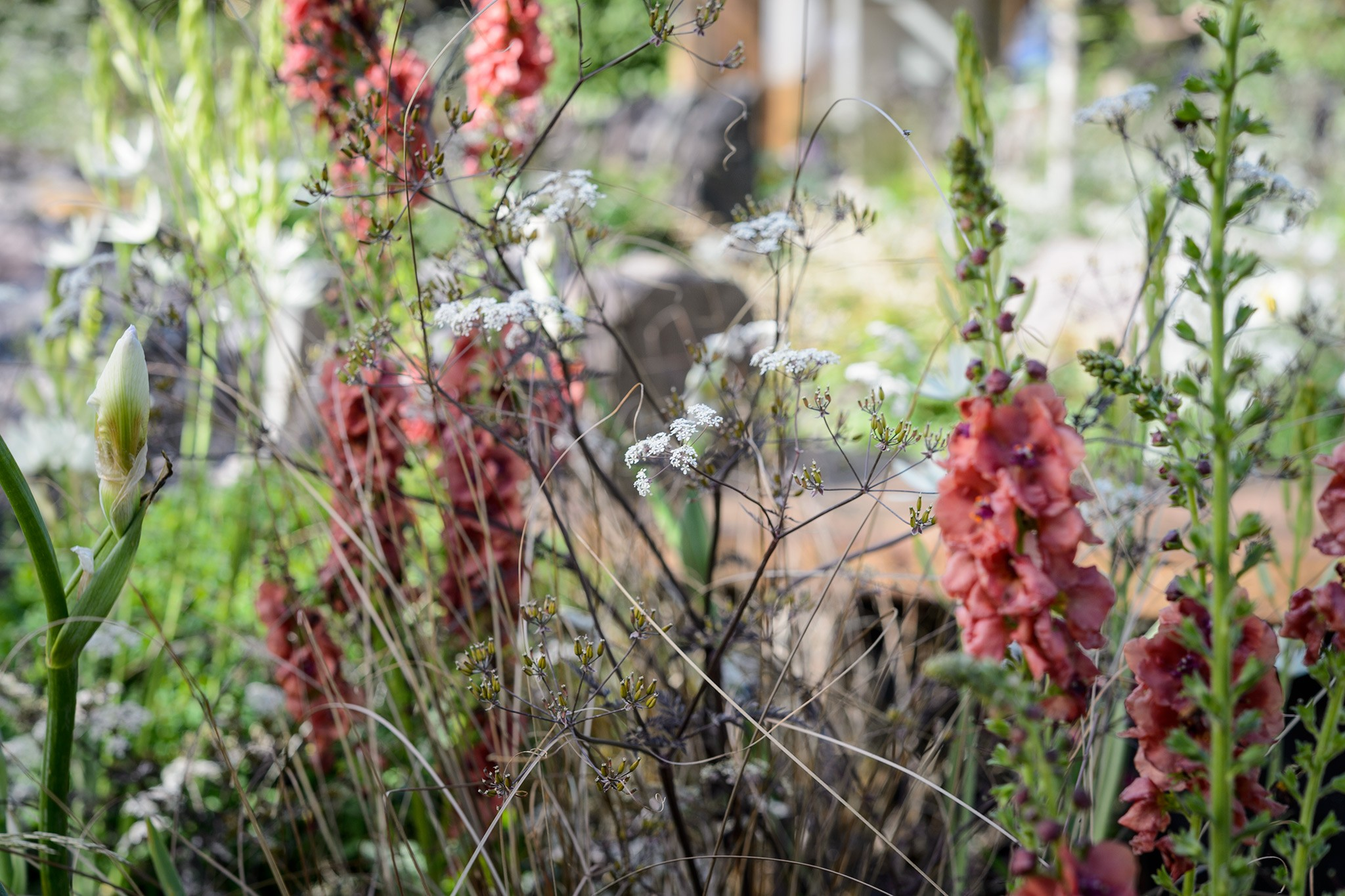Spring Colour Plant Combinations